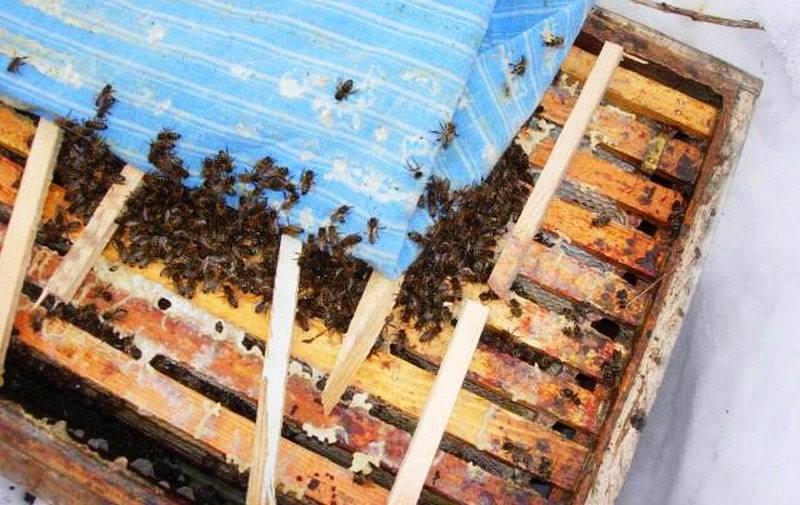 Отводки пчел